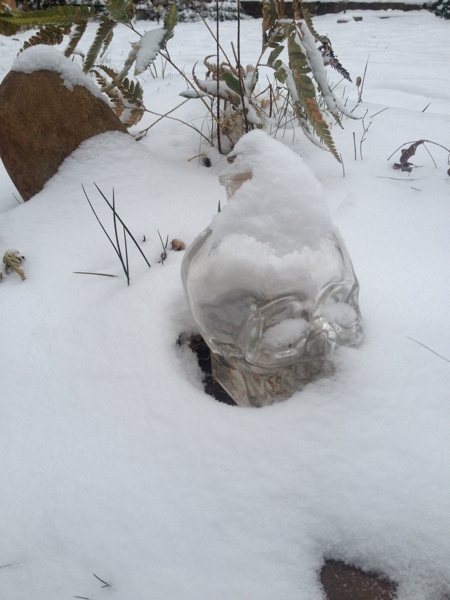 the skull in snow